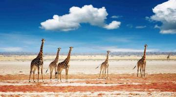 4 days Masai Mara and lake nakuru lodge safaris