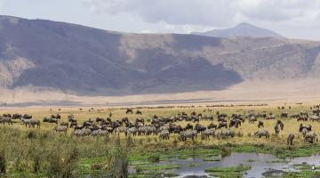 15 Day Classic Tanzania