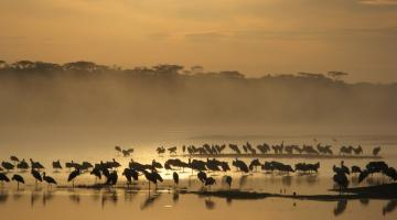 8 Days | Lake Nakuru | Masai Mara | Wildebeest Migration | Lodge Safari