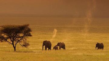 14 Days | Masai Mara | Naivasha | Nakuru | Baringo | Samburu | Mount Kenya | Amboseli | Tsavo East | Nairobi or Mombasa | Lodge Safari